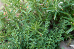 Thyme and rosemary are two herbs which are easy to grow.