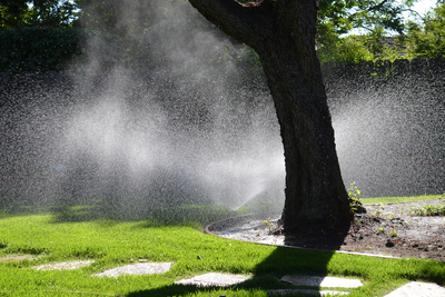 Proper watering is imperative in a hot region like Texas.
