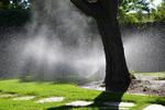 Proper watering is imperative in a hot region like Texas.