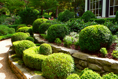The manicured shapes of toparies make for eye-catching outdoor scenery.